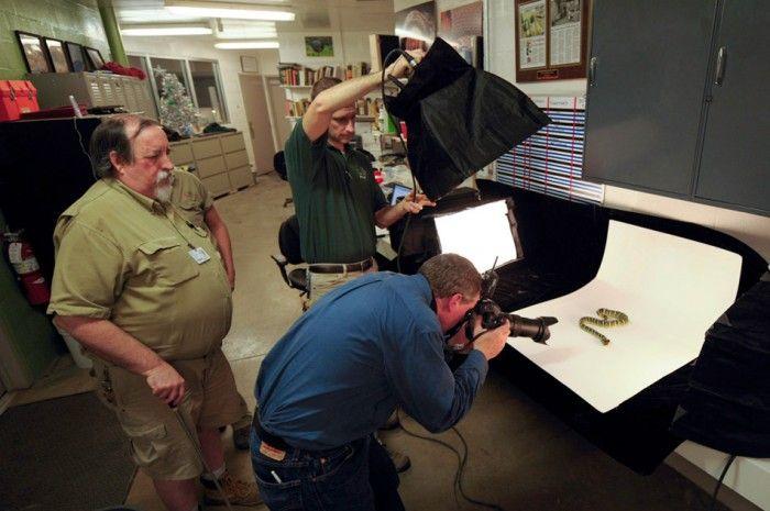 Процесс создания фотографий животных от National Geographic (36 фото)