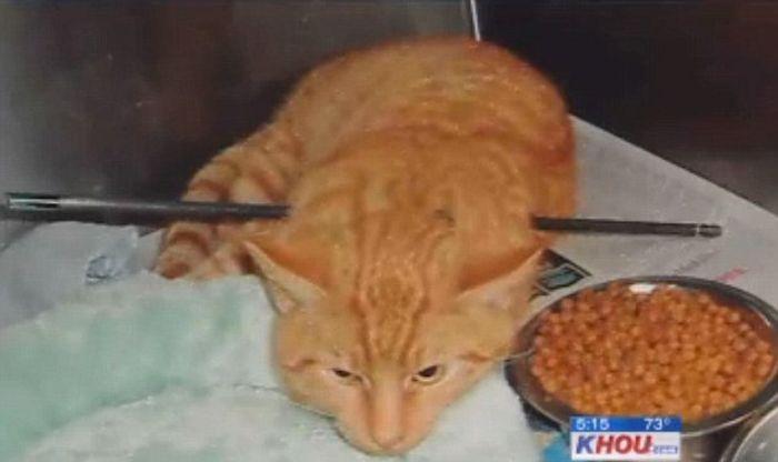 Везучий кот по кличке Купидон! (4 фото + 1 видео)