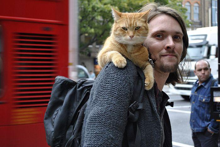 кот, боб,