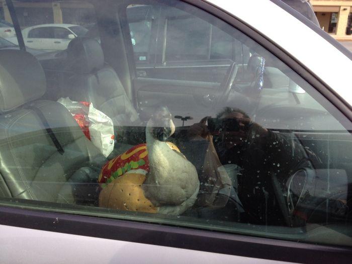 Прикол за стеклом, пассажир, прикол, птица в машине, смешная фотография