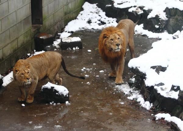 Gente estúpida en el Zoo Lev-0002