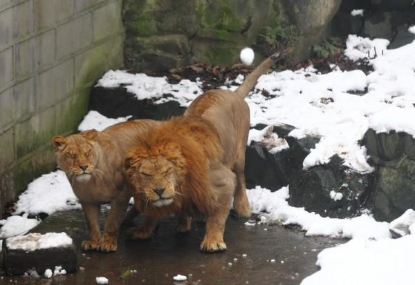 Gente estúpida en el Zoo Lev-0003