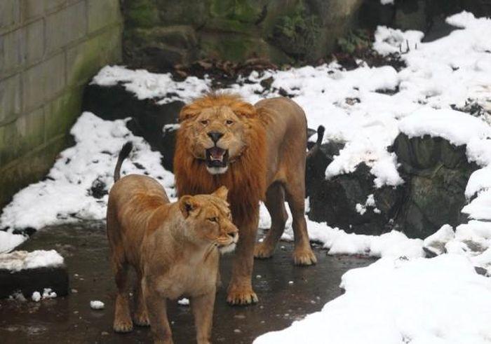 Gente estúpida en el Zoo Tn