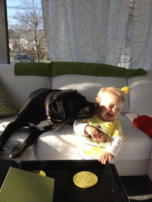 Бугагашеньки девочка, лижет. песик, милаха, прикольная фотографи, ребенок с собакой