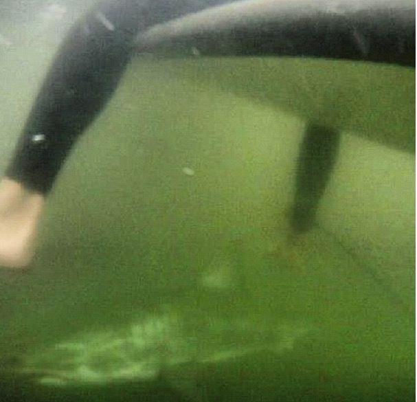 Яркие фото акула атакует, жесть, океан, рыба, серфер, серферская доска, хищник