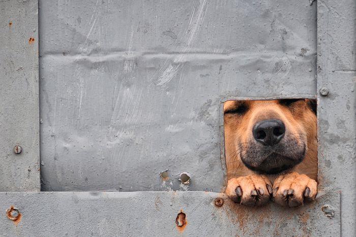 Фанни фото выражение лица, дырка в двери, прикол, смешная фотка, собака улыбака