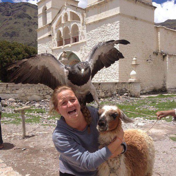 Фотоприкол бесплатно выражение лица, девушка, за секунду до, лама, нападение, орел, птица