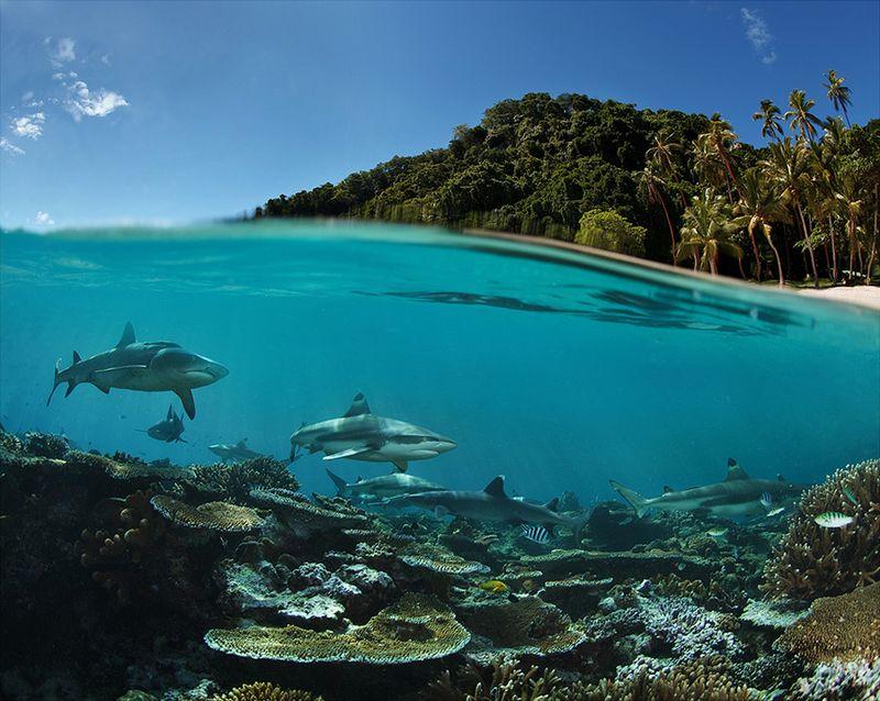 Фотожесть акулы, море, океан, пальмы, песок, подводный мир, рифовая акула, тропический курорт
