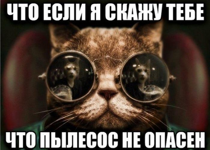 Шикарное фото картинка с надписью, кот, открыл тайну, прикол, пылесос