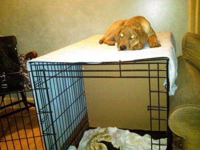Фотоальбом домашнее животное, конура, питомец, прикол, собака, спит