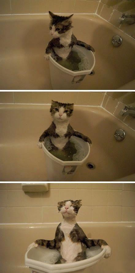 Смешные картинки ванная, выражение лица, котенок, моется, прикол, смешная фотка