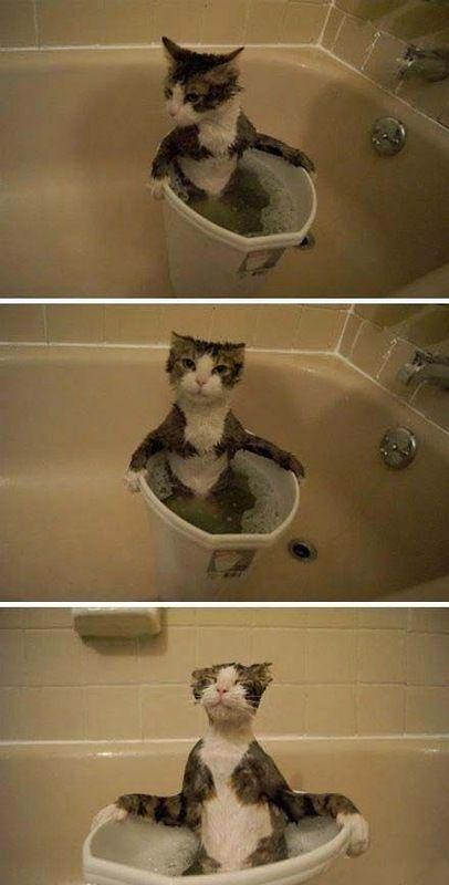 Фотоприкол онлайн в ванной, выражение лица, котенок, кошка, купается
