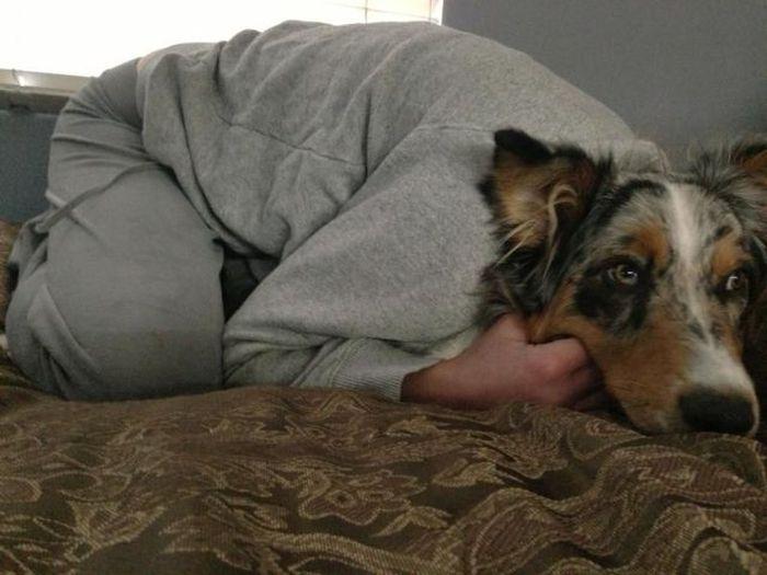 Фотоальбом выражение лица, голова собаки, как человек, собака