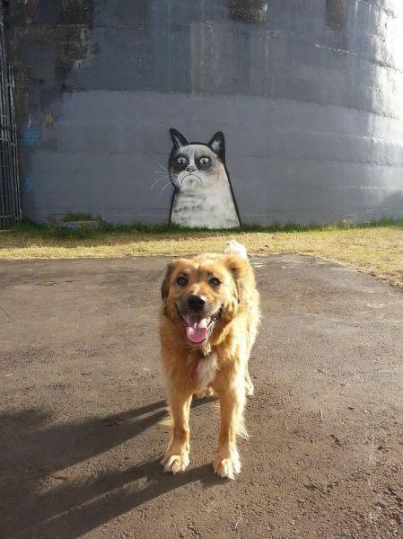 Новые фото выражение лица, граффити, кошка, песик, рисунок на стене, собака