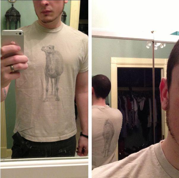 Новые фото верблюд, перед зеркалом, рисунок на футболке, фотография