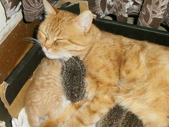кошка, котята, ежата