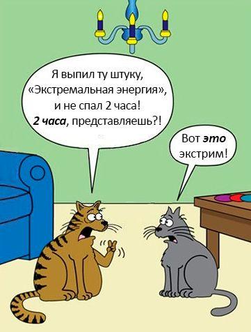 Бесплатно фото диалог, картинка с надписью, комикс, кошки, прикол