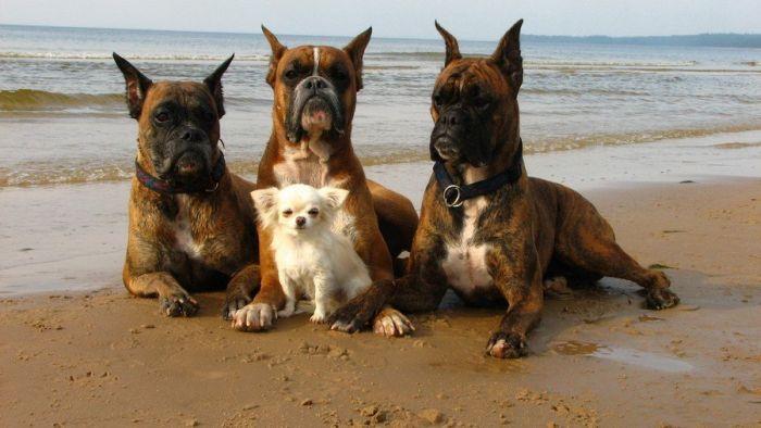 Прикол красивая фотография, маленькая, на берегу моря, песик, собаки, собачка