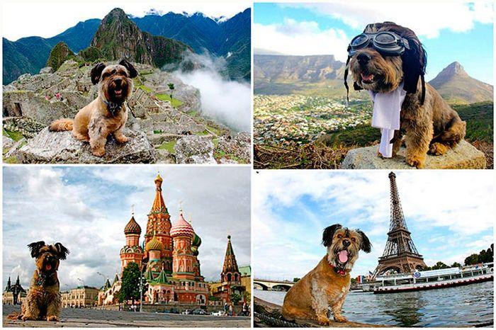 оскар, пес, путешественник,