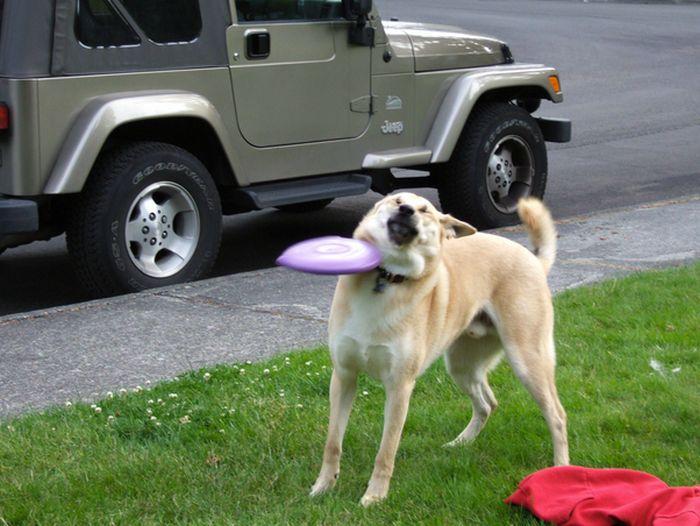 Фото в голову, за секунду до, прикол, собака, тарелка, точное попадание, фрисби