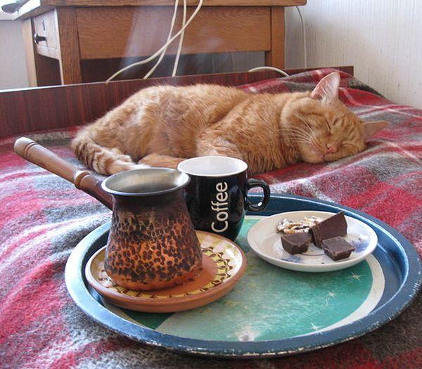 Бесплатный фотоприкол вкуснятина, завтрак в постель, котейка, кофе, рыжий кот, сладости, шоколад