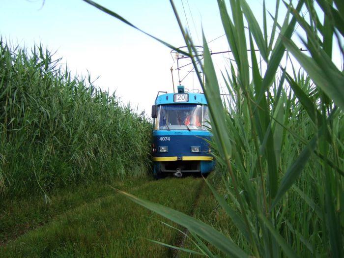 Фотография железная дорога, поле, рельсы, трамвай, трамвайные пути