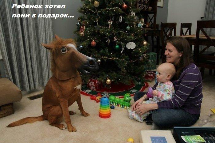 Бесплатно фото голова лошади, картинка с надписью, лошадь, пони, прикол, ржака, рождество, собака