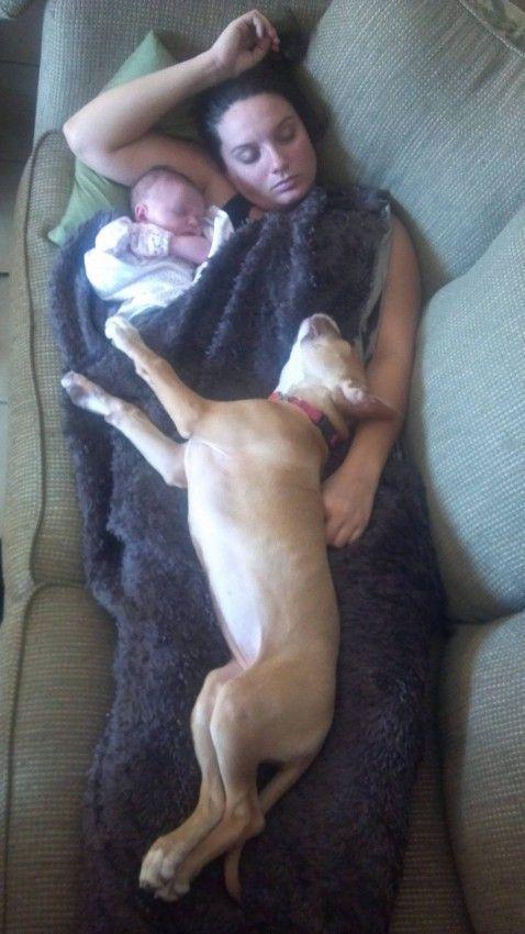 Фотоприкол дня женщина, мама и ребенок, собака, спят вместе, хозяйка