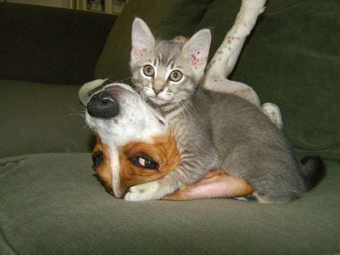 Фанни фото дружба, котенок, пес и кот, питомцы, прикол, собака