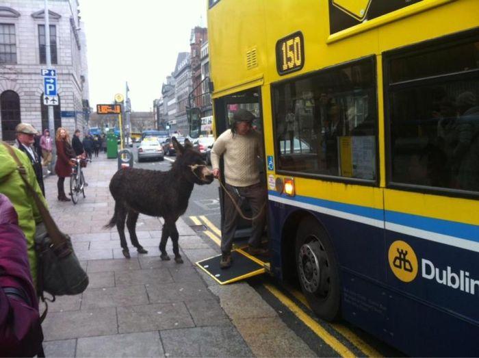 Юмор автобус, животное, ишак, лошадь, общественный транспо, питомец