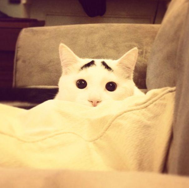 Необычный кот, которого прозвали