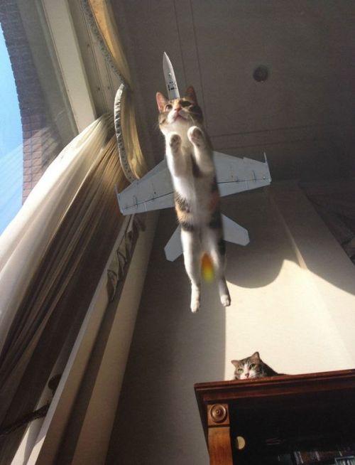 Смешной фотоприкол кот самолет, котейка, пририсовали, прыжок, фотошоп