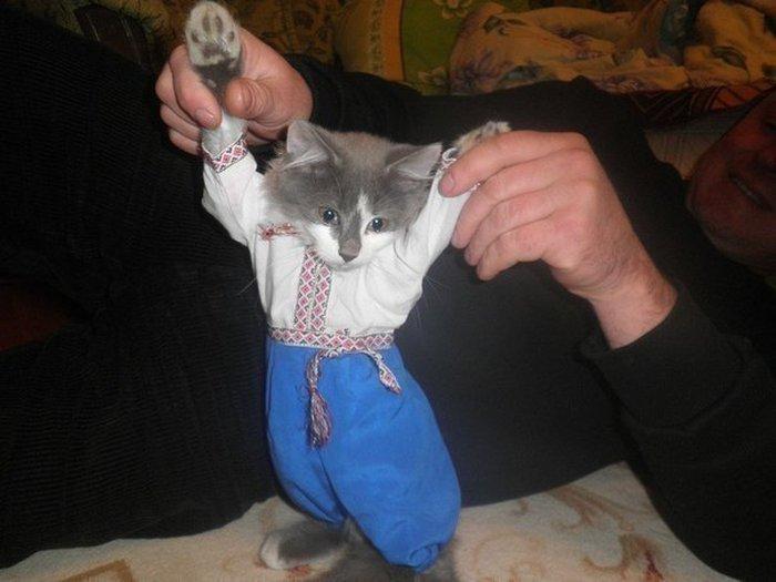 Фото костюм, котейка, нарядил кота, одежда, одел кота, прикол, традиционная