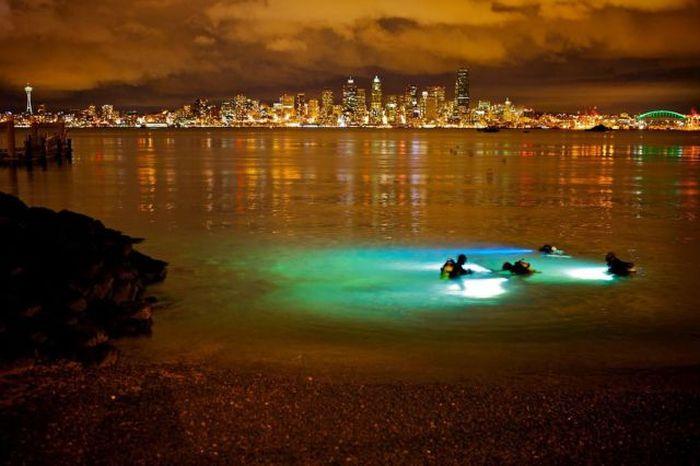 Прекрасные фото водолазы, ищут, красивая фотография, мегаполис, ночной город, погружение, поиск