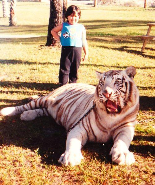 Фотография бенгальский тигр, большая кошка, парк, питомец, ребенок
