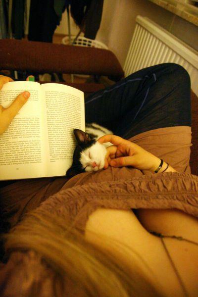 Фотоподборка выражение лица, девушка, книжка, котейка, красивая грудь, питомец