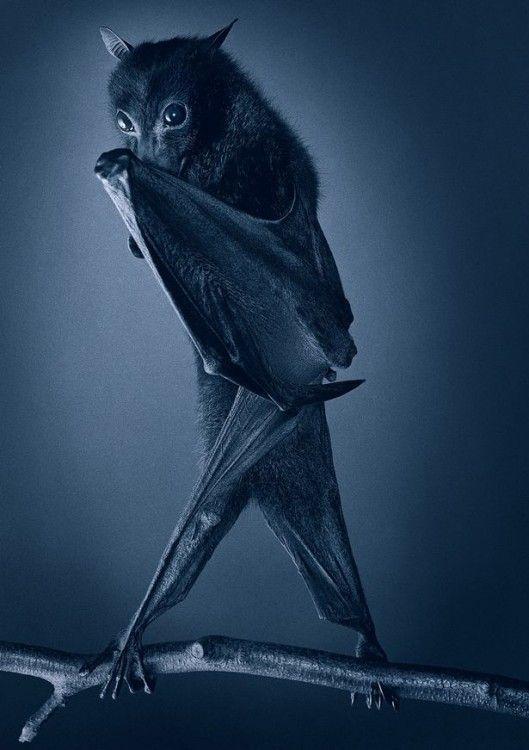 Смешные картинки летучих мышей
