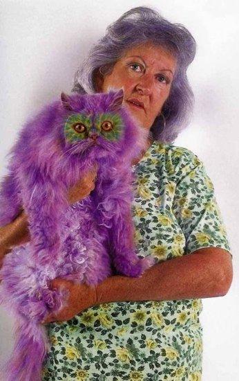 Мода по-кошачьи (30 фото)