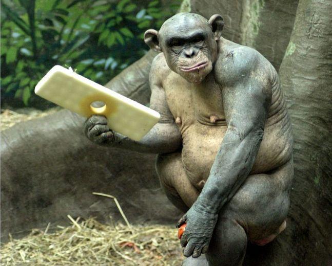 Порно истории обезьяна