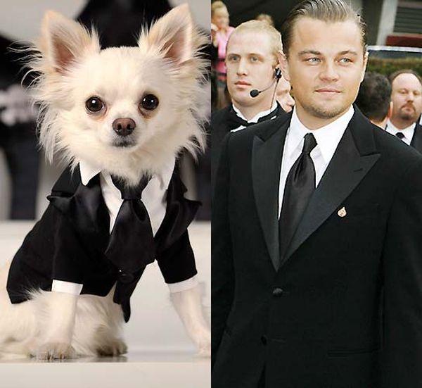 Показ моды для собак Little Lily в предверии «Оскара»  (15 фото)
