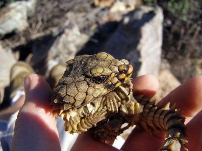 Классная ящерица (5 фото)
