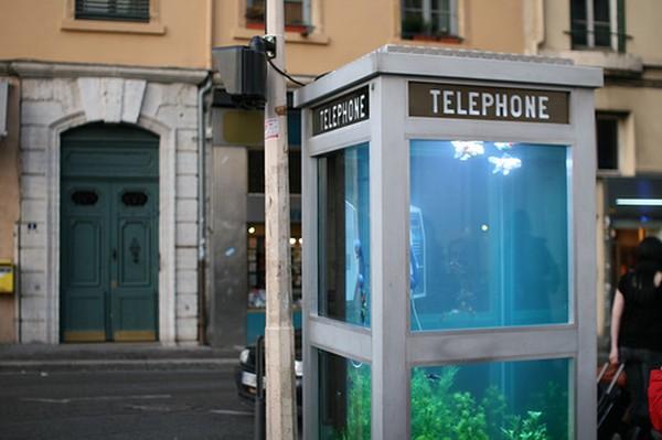 Аквариум в телефонной будке (5 фото)