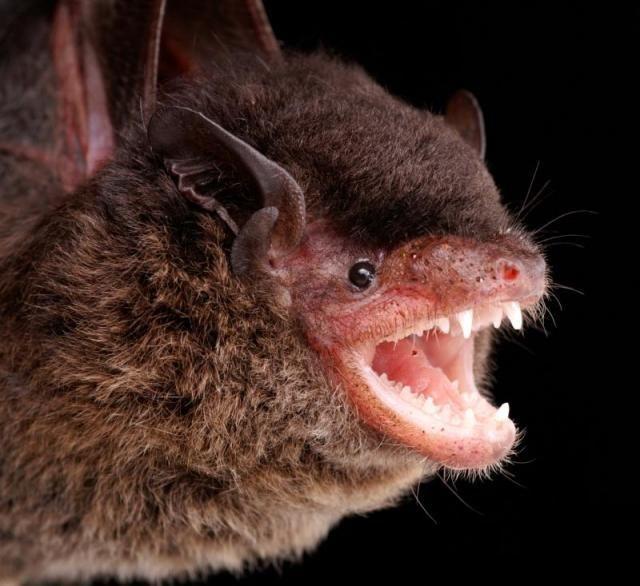 Летучие мыши с непривычного ракурса (54 фото)