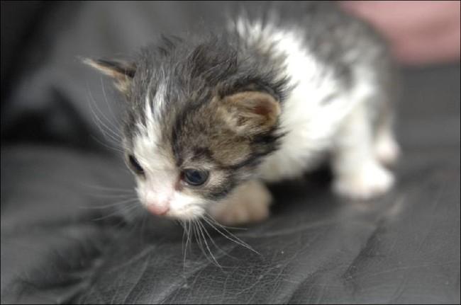 Кошачья мама (6 фото)