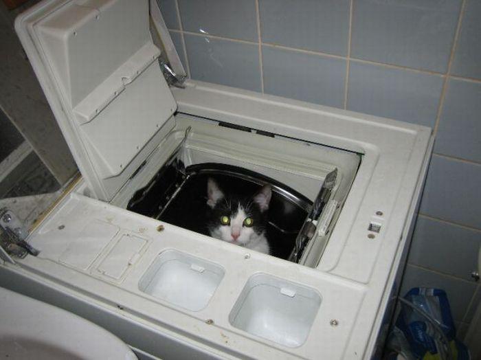 Самые забавные коты (142 фото)