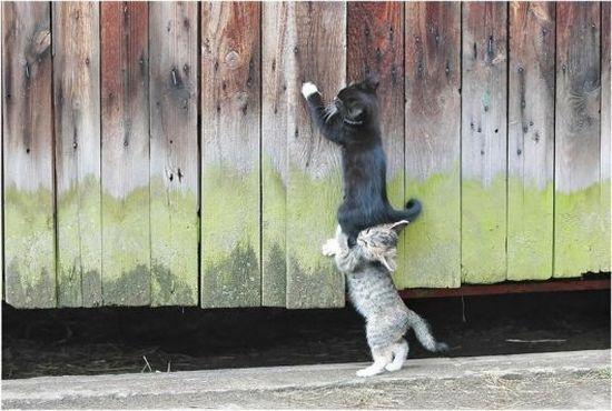 Коты...коты...о эти коты)))))))))