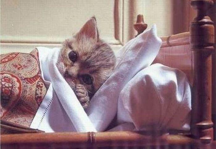 котик приболел картинки может