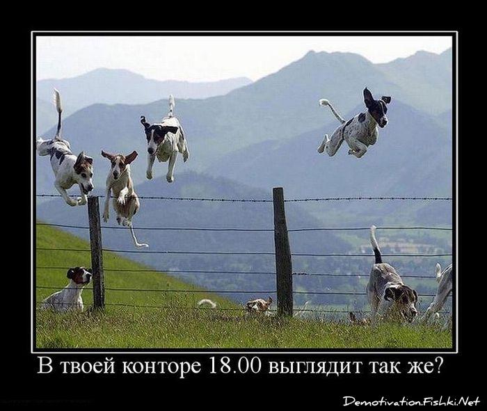 http://fishki.net/picsw/022010/12/post/demotivator/2099.jpg