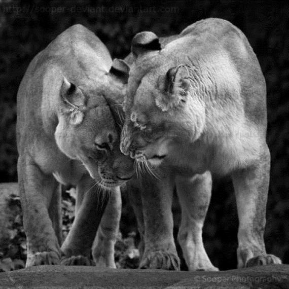 Забавные животные (30 фото)