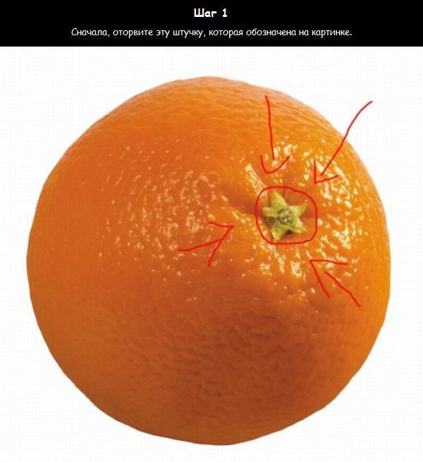 Как узнать сколько долек в апельсине (5 фото)